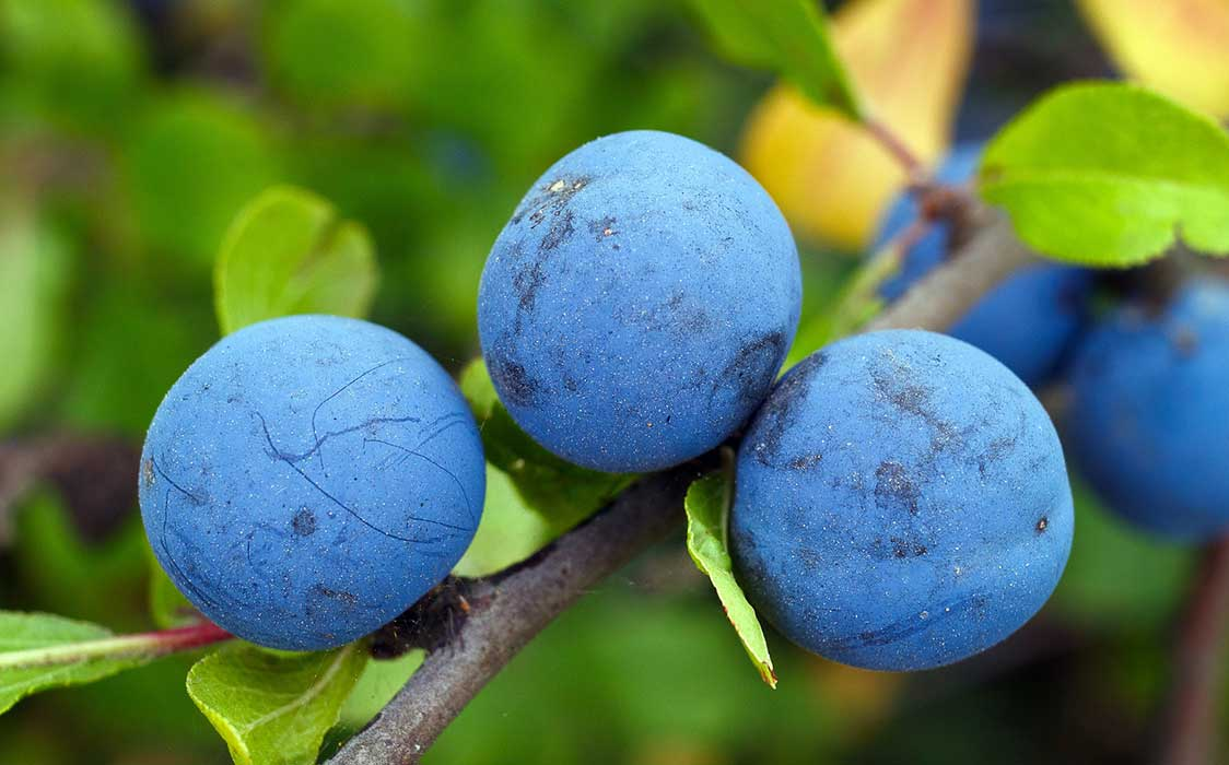 5 Health Benefits Of Blueberries